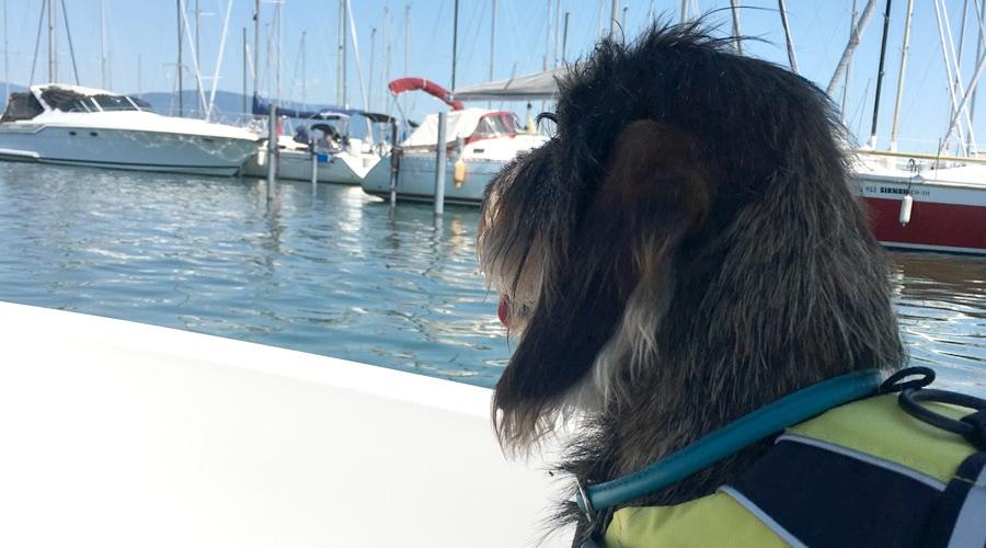 Terhi 400 - Ideal für Hunde